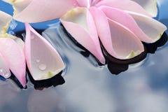Pétalas de Rosa na água Foto de Stock Royalty Free