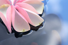 Pétalas de Rosa na água Fotografia de Stock Royalty Free
