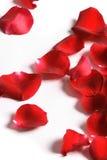 Pétalas de uma rosa, fotos de stock royalty free