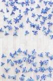 Pétalas dispersadas do jacinto fotografia de stock royalty free