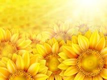 Pétalas do girassol com sol do verão Eps 10 Fotografia de Stock Royalty Free