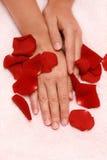 Pétalas e mãos das mulheres Imagem de Stock