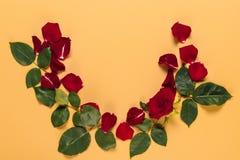 Pétalas e rosa do vermelho Imagem de Stock
