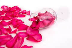 Pétalas e vidro de Rosa Foto de Stock Royalty Free