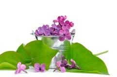 Pétalas lilás Imagem de Stock