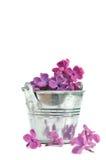 Pétalas lilás roxas Foto de Stock