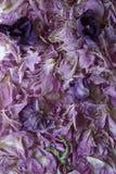 Pétalas roxas secadas da peônia fotografia de stock