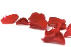 Pétalas vermelhas Imagem de Stock Royalty Free