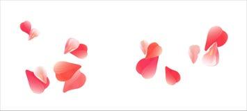 Pétalas vermelhas cor-de-rosa de voo isoladas no fundo branco Pétalas de rosas Flores de queda da cereja Cmyk do EPS 10 do vetor Ilustração do Vetor