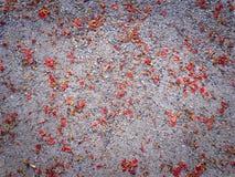 Pétalas vermelhas secas da flor no assoalho Foto de Stock