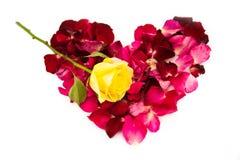 Pétale de fleur rose pour le Saint Valentin Images stock