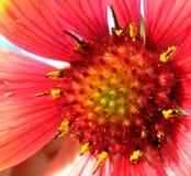 Pétale de fleur rouge Image stock