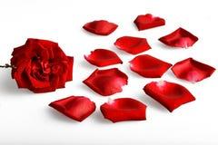 pétale de rose Photos libres de droits