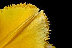 Pétale jaune Photos stock