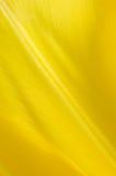 Pétale jaune Photographie stock libre de droits