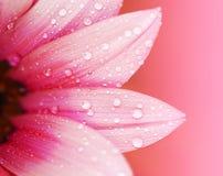 Pétales abstraits de fleur Image stock