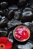Pétales d'Aromatherapy et marguerite de gerber Images stock