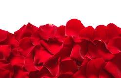 Pétales d'une rose images libres de droits
