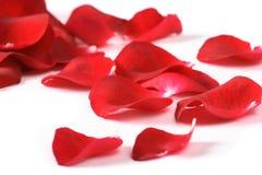 Pétales d'une rose, photographie stock libre de droits