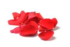 Pétales d'une rose rouge d'isolement Photographie stock