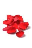 Pétales d'une rose rouge d'isolement Image libre de droits