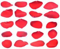 Pétales d'une rose rouge d'isolement photos libres de droits