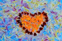 Pétales de fleur Image libre de droits