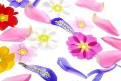 Pétales de fleur Photo stock