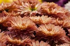 Pétales de fleur avec des baisses de rosée Images libres de droits