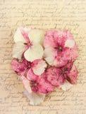 Pétales de fleur d'hortensia Image libre de droits