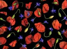 Pétales de fleur d'isolement Photographie stock