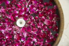 Pétales de fleur dans l'eau Photographie stock