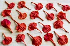 Pétales de fleur de paon Image stock