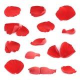 Pétales de fleur de rose de rouge réglés d'isolement Images libres de droits