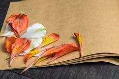 Pétales de fleur de lettre d'amour, jour du ` s de Valentine Photographie stock