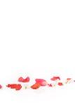 Pétales de fleur rouge et blanche Images stock