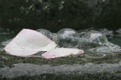 Pétales de fleur sous la pluie images libres de droits