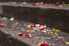 Pétales de fleur sur les étapes en pierre Photographie stock libre de droits