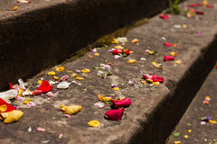 Pétales de fleur sur les étapes en pierre Image libre de droits