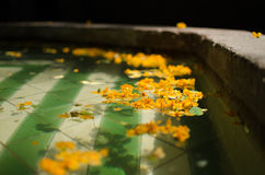 Pétales de flottement de fleur dans une fontaine Photos libres de droits