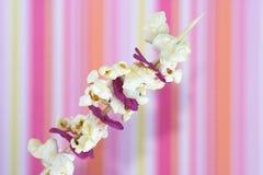 Pétales de maïs éclaté et de fleur sur a Photographie stock