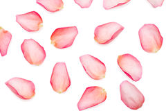Pétales de Rose Photographie stock libre de droits