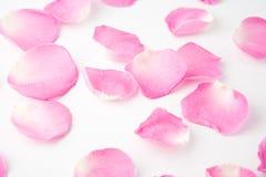 Pétales de Rose Photos libres de droits