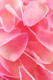 Pétales de Rose Images stock