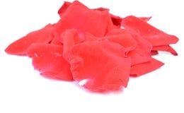 Pétales de rose avec des baisses de l'eau d'isolement sur le fond blanc Photographie stock libre de droits
