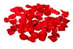 Pétales de Rose d'isolement Photo stock