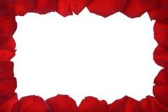 Pétales de rose d'isolement sur le blanc Images stock