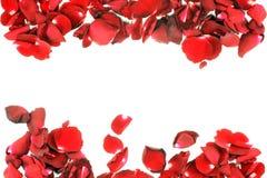 Pétales de rose d'isolement sur le fond blanc Photographie stock libre de droits