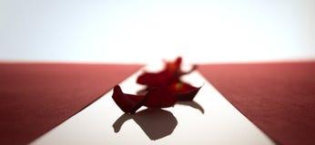 Pétales de rose dans une rangée entre les rayures rouges Photos stock