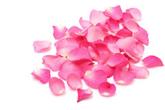 Pétales de rose de plan rapproché sur le blanc Photographie stock libre de droits